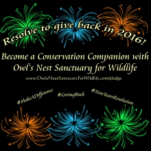 Make a New Year's Resolution to give back to Tampa's wildlife rehabilitation organization!