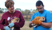 Federally permitted rehabber, Kris, and one of her volunteers, Will, preparing for the release.