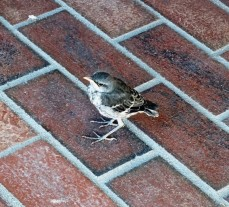 MockingbirdBrick