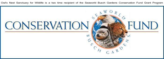 Seaworld Busch Blog Logo
