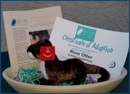 Otter Adoption Kit
