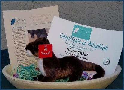 Otter Adoption Kit