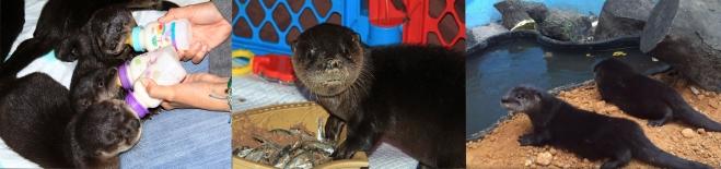 otter Banner 2