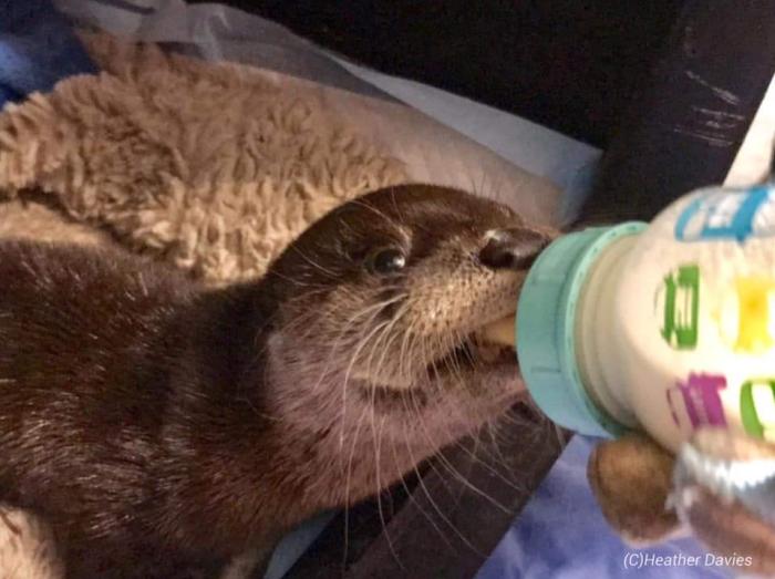 Otter 2 2